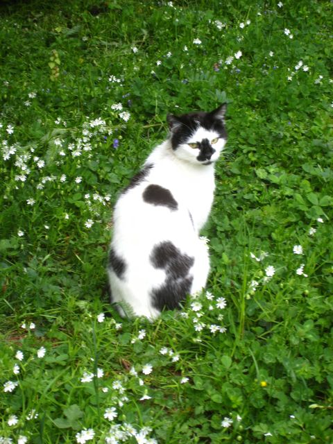 Splat cat