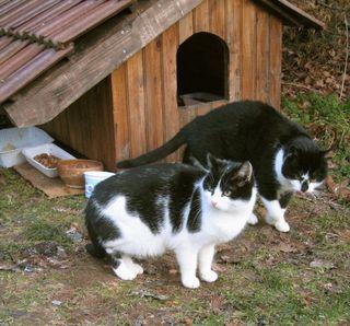 Poubelle cats