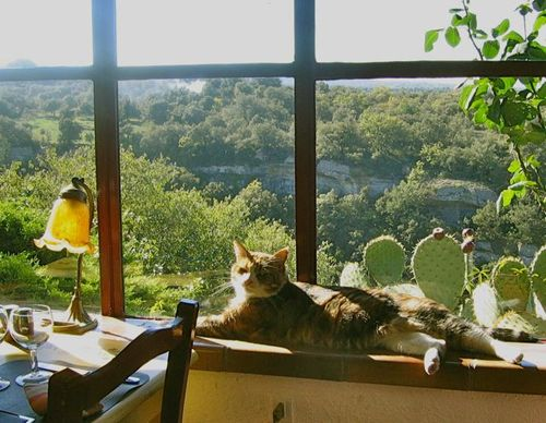 Window cat2