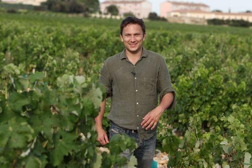 Olivier dans les vignes