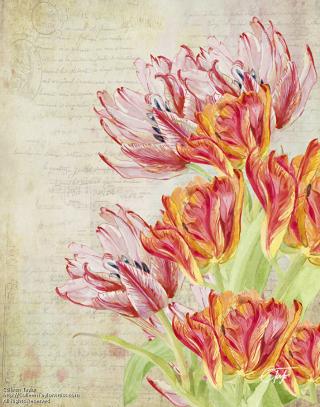 Tulipes-du-jardin